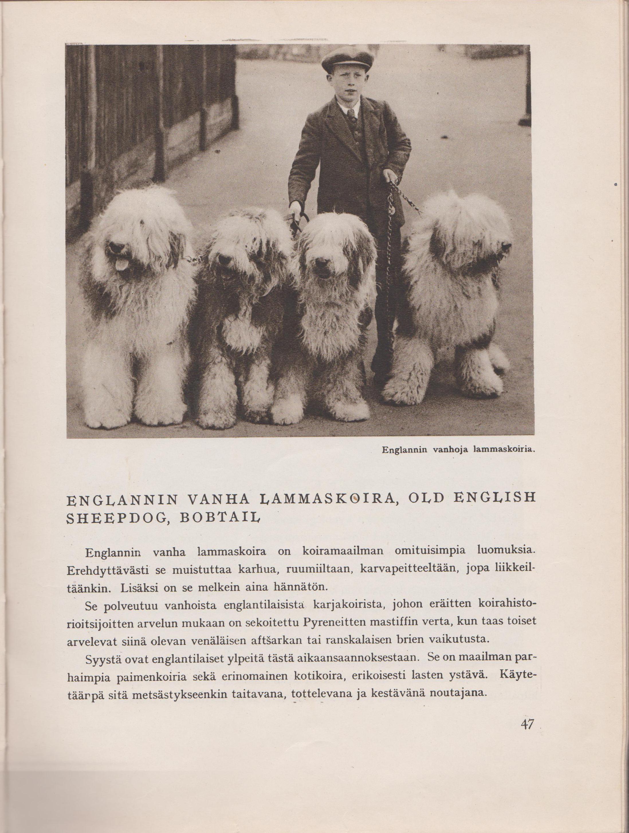 vanha koirakirja vuodelta