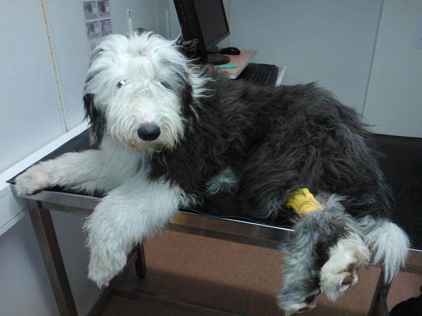 Töppönen odottelee Eläinsairaalassa verikokeiden tuloksia