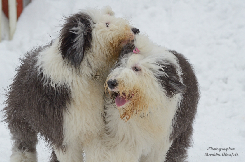 Puppy gathering