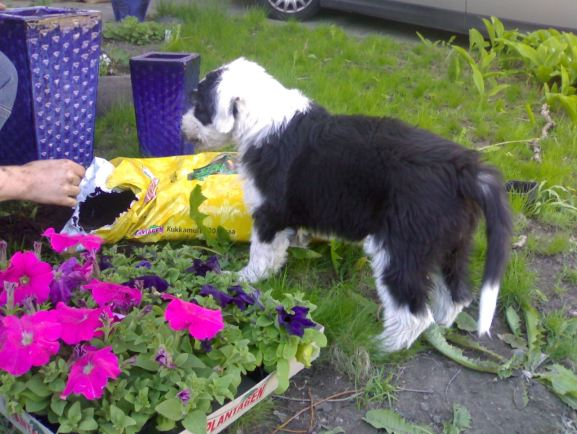 Mustikka saapui meille toukokuussa 2007
