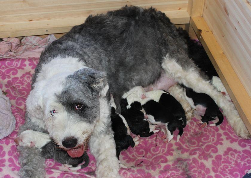 mamma ja lapset