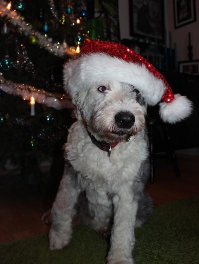 joulumummo mustikka