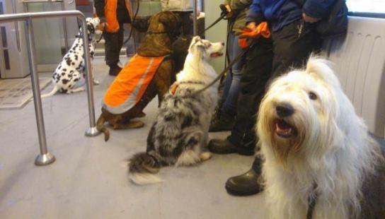 lissu-ja-kaverit-junassa